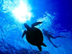 Swimming with a Guam sea turtle